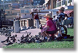 california, horizontal, marin, marin county, north bay, northern california, people, pigeons, san francisco bay area, west coast, western usa, photograph