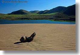beaches, california, horizontal, logs, marin, marin county, north bay, northern california, sand, west coast, western usa, photograph