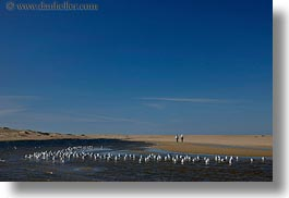 beaches, california, horizontal, lagoon, marin, marin county, north bay, northern california, seagulls, west coast, western usa, photograph