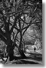 bear valley trail, black and white, california, forests, hikers, marin, marin county, nature, north bay, northern california, paths, plants, trees, vertical, west coast, western usa, photograph