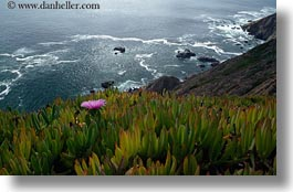 blues, california, colors, green, horizontal, ice plants, landscapes, marin, marin county, north bay, northern california, ocean, pink, west coast, western usa, photograph