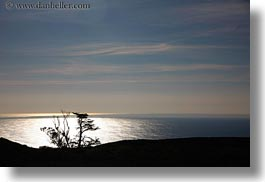 california, horizontal, landscapes, marin, marin county, north bay, northern california, ocean, silhouettes, trees, west coast, western usa, photograph