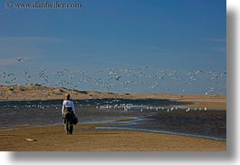 beaches, california, flying, horizontal, jack jill, jills, marin, marin county, north bay, northern california, people, seagulls, west coast, western usa, photograph