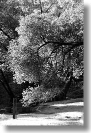 billowy, black and white, california, marin, marin county, north bay, northern california, phoenix lake park, ross, trees, vertical, west coast, western usa, photograph