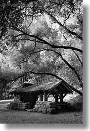 black and white, branches, california, huts, marin, marin county, north bay, northern california, phoenix lake park, ross, stones, vertical, west coast, western usa, woods, photograph