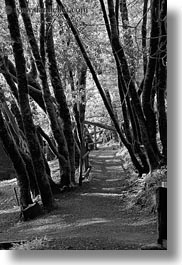 black and white, california, marin, marin county, north bay, northern california, paths, phoenix lake park, ross, trees, vertical, west coast, western usa, photograph