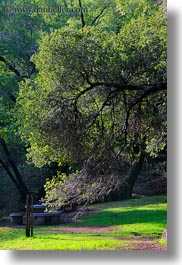 archways, branches, california, colors, forests, green, lush, marin, marin county, nature, north bay, northern california, phoenix lake park, plants, ross, scenics, trees, vertical, west coast, western usa, photograph