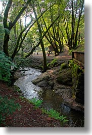 bridge, california, colors, forests, green, lush, marin, marin county, nature, north bay, northern california, phoenix lake park, plants, ross, scenics, stream, trees, vertical, west coast, western usa, photograph
