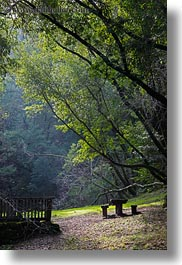 benches, california, colors, forests, green, lush, marin, marin county, nature, north bay, northern california, phoenix lake park, picnic, plants, ross, scenics, trees, vertical, west coast, western usa, photograph