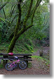 bicycles, california, colors, forests, green, lush, marin, marin county, nature, north bay, northern california, phoenix lake park, pink, plants, ross, scenics, trees, vertical, west coast, western usa, photograph