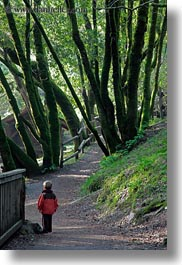 boys, california, childrens, colors, forests, green, lush, marin, marin county, nature, north bay, northern california, people, phoenix lake park, plants, ross, russel, scenics, trees, vertical, west coast, western usa, photograph