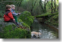 animals, boys, california, childrens, colors, dogs, forests, green, horizontal, jacks, labrador, lush, marin, marin county, nature, north bay, northern california, people, phoenix lake park, plants, ross, russel, scenics, trees, west coast, western usa, photograph