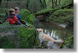 animals, boys, california, childrens, colors, dogs, forests, green, horizontal, kyle, labrador, lush, marin, marin county, nature, north bay, northern california, people, phoenix lake park, plants, ross, russel, scenics, trees, west coast, western usa, photograph