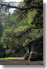 arching, branches, buildings, california, colors, forests, green, huts, lush, marin, marin county, nature, north bay, northern california, phoenix lake park, plants, ross, scenics, stones, structures, trees, vertical, west coast, western usa, woods, photograph