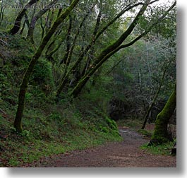 california, colors, forests, green, lush, marin, marin county, nature, north bay, northern california, paths, phoenix lake park, plants, ross, scenics, square format, trees, west coast, western usa, photograph