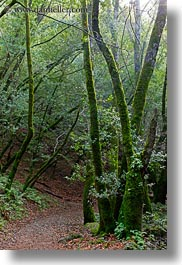 california, colors, forests, green, lush, marin, marin county, nature, north bay, northern california, paths, phoenix lake park, plants, ross, scenics, trees, vertical, west coast, western usa, photograph