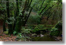 california, colors, forests, green, horizontal, lush, marin, marin county, nature, north bay, northern california, phoenix lake park, plants, ross, scenics, stream, trees, west coast, western usa, photograph