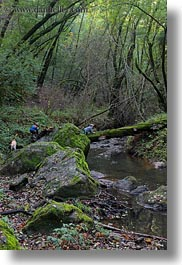 boys, california, childrens, colors, forests, green, lush, marin, marin county, nature, north bay, northern california, people, phoenix lake park, plants, ross, scenics, stream, trees, vertical, west coast, western usa, photograph