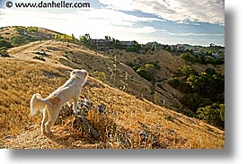 anselmo, california, horizontal, landscapes, marin, marin county, north bay, northern california, sammy, san anselmo, san francisco bay area, west coast, western usa, photograph
