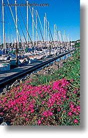 boats, california, flowers, marin, marin county, north bay, northern california, san francisco bay area, sausalito, vertical, west coast, western usa, photograph