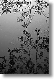 black and white, branches, california, marin, marin county, north bay, northern california, reflect, reflections, san francisco bay area, tennessee, vertical, water, west coast, western usa, photograph