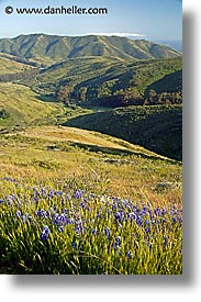 california, flowers, landscapes, marin, marin county, north bay, northern california, san francisco bay area, tennessee, tennessee valley, valley, vertical, west coast, western usa, photograph