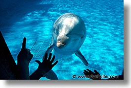 california, dolphins, horizontal, marine world, west coast, western usa, photograph