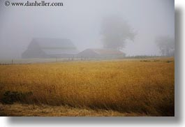 barn, buildings, california, fields, fog, horizontal, mendocino, nature, west coast, western usa, photograph