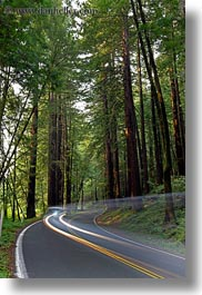 california, car headlights, cars, colors, forests, green, headlights, light streaks, materials, mendocino, motion blur, nature, plants, redwood trees, redwoods, slow exposure, streets, trees, vertical, west coast, western usa, woods, photograph