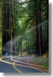 california, car headlights, cars, colors, forests, green, headlights, light streaks, long exposure, materials, mendocino, motion blur, nature, plants, redwood trees, redwoods, streets, trees, vertical, west coast, western usa, woods, photograph