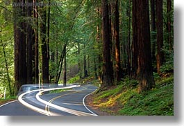 california, car headlights, cars, colors, forests, green, headlights, horizontal, light streaks, long exposure, materials, mendocino, motion blur, nature, plants, redwood trees, redwoods, streets, trees, west coast, western usa, woods, photograph