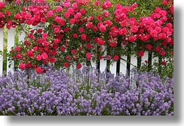 california, fences, flowers, horizontal, mendocino, nature, west coast, western usa, white, photograph