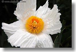 Photospictures of flowers california flowers horizontal mendocino nature west coast western usa mightylinksfo