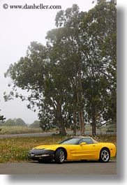 california, cars, eucalyptus, mendocino, nature, plants, trees, vertical, west coast, western usa, yellow, photograph