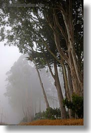 california, eucalyptus, fog, mendocino, nature, plants, trees, vertical, west coast, western usa, photograph