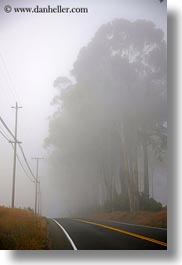 california, eucalyptus, fog, mendocino, nature, plants, roads, telephone wires, trees, vertical, west coast, western usa, photograph