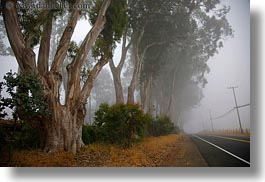 california, eucalyptus, fog, horizontal, mendocino, nature, plants, roads, telephone wires, trees, west coast, western usa, photograph
