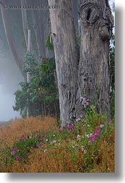 california, eucalyptus, flowers, fog, mendocino, nature, plants, trees, vertical, west coast, western usa, photograph