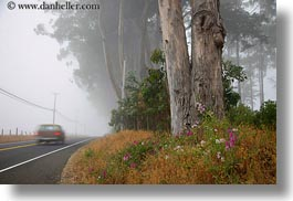 california, cars, eucalyptus, flowers, fog, horizontal, mendocino, nature, plants, trees, west coast, western usa, photograph
