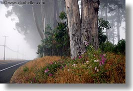 california, eucalyptus, flowers, fog, horizontal, mendocino, nature, plants, roads, trees, west coast, western usa, photograph