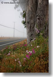 california, eucalyptus, flowers, fog, mendocino, nature, plants, roads, trees, vertical, west coast, western usa, photograph