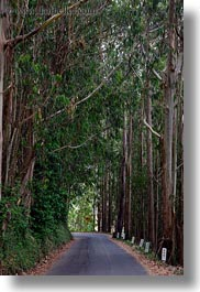 california, eucalyptus, mendocino, roads, trees, vertical, west coast, western usa, photograph