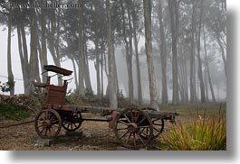 california, eucalyptus, fog, horizontal, mendocino, nature, plants, stage coach, transportation, trees, west coast, western usa, photograph