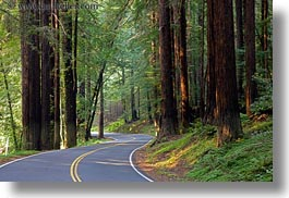 california, colors, forests, green, horizontal, long exposure, materials, mendocino, nature, plants, redwood trees, redwoods, streets, trees, west coast, western usa, woods, photograph