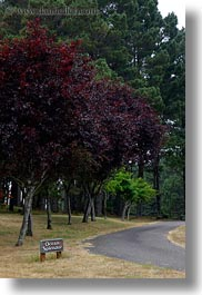 california, mendocino, ocean, purple, signs, splendor, trees, vertical, west coast, western usa, photograph