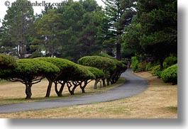 california, horizontal, mendocino, round, tops, trees, west coast, western usa, photograph