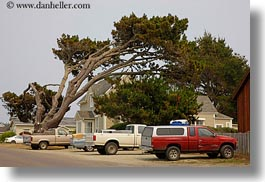 california, emotions, horizontal, humor, leaning, mendocino, over, trees, trucks, west coast, western usa, photograph