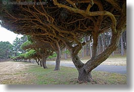 california, horizontal, mendocino, paths, trees, under, west coast, western usa, photograph