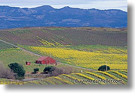 california, horizontal, houses, napa, vineyards, west coast, western usa, photograph