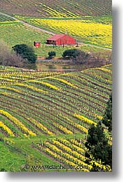california, houses, napa, vertical, vineyards, west coast, western usa, photograph